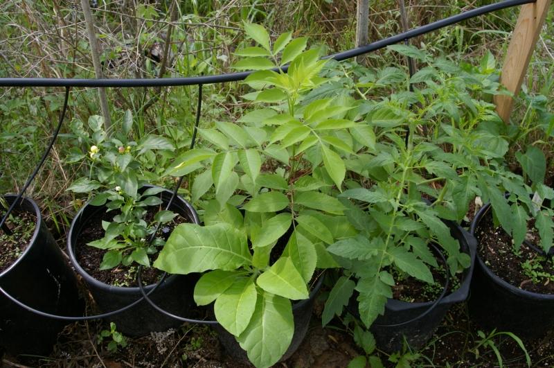Ядовитые растения противоядие