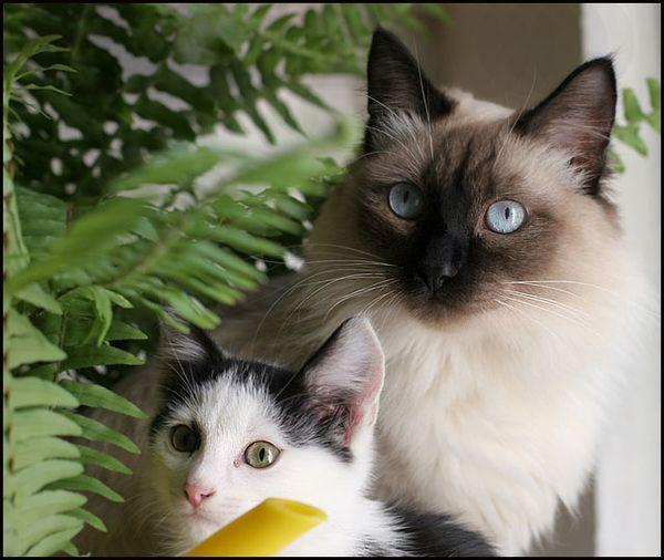 Ядовитые растения для кошек и собак