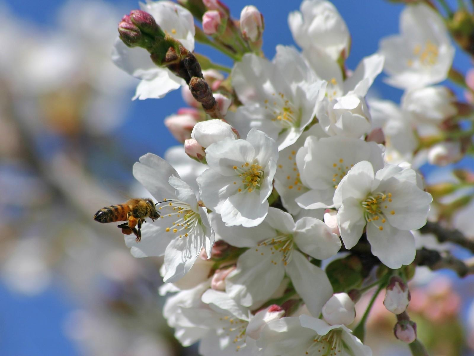Природа весной растения строение