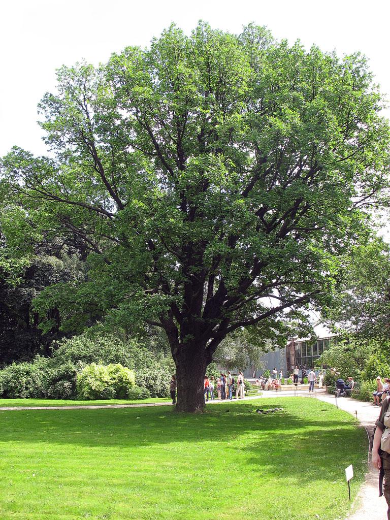 Чем старше дерево тем темнее у него