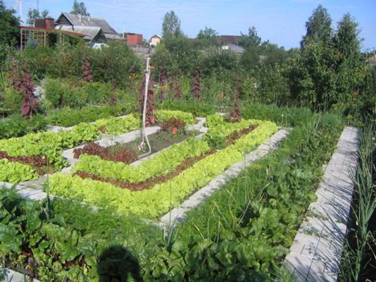 07 05 2011 00 00 в огороде пусто выросла