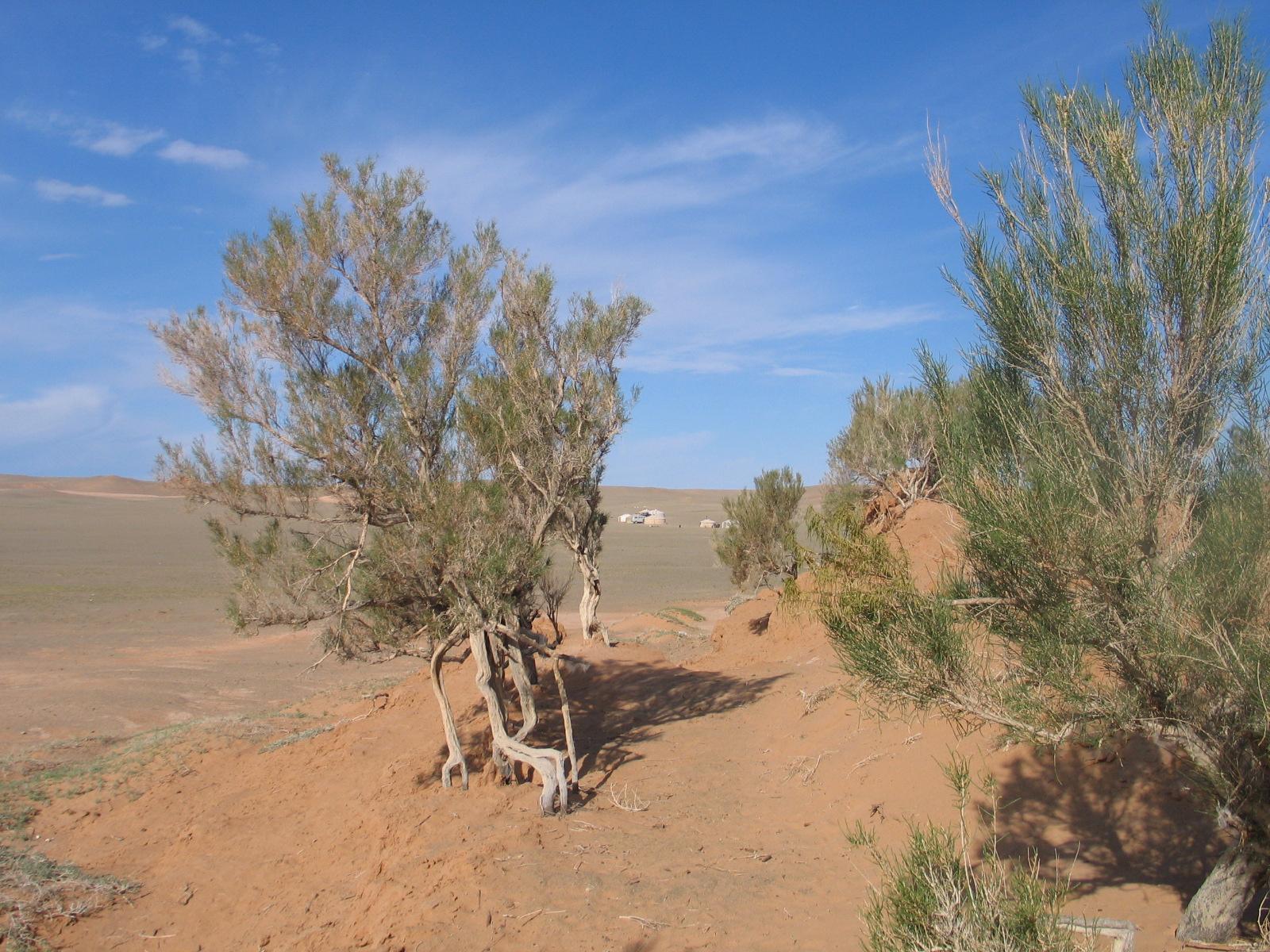 Рослини в пустелі фото 15 фотография