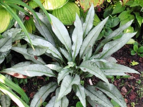 Комнатные растения орхидеи